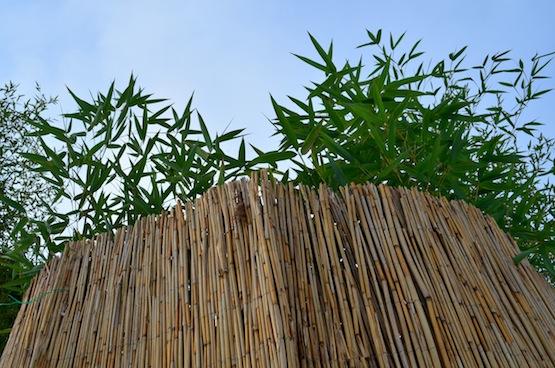 artenblog | Wild Gardening | Winterschutz | Garten Blog über einen Garten in der Heide