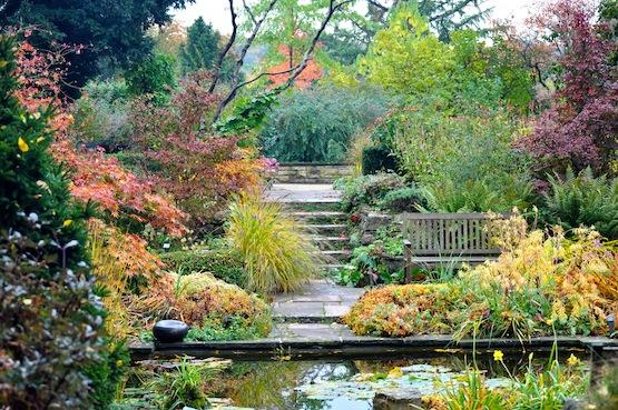 artenblog | Wild Gardening | Förster Garten Potsdam | Garten Blog über einen Garten in der Heide