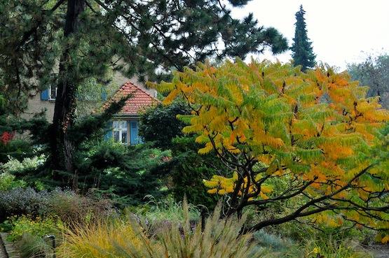 artenblog | Wild Gardening |Garten Karl Förster Potsdam| Garten Blog über einen Garten in der Heide