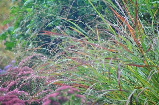 Gartenblog | Wild Gardening | Förster Garten | Garten Blog über einen Garten in der Heide