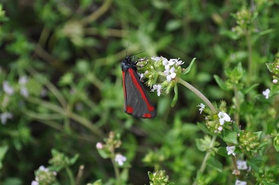 Gartenblog | Wild Gardening |  Garten Blog über einen Garten in der Heide