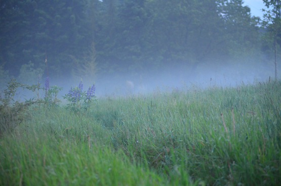 Gartenblog | Wild Gardening | Nebel | Garten Blog über einen Garten in der Heide