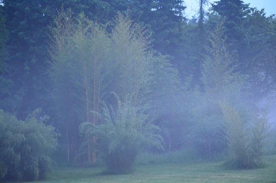 Gartenblog | Wild Gardening | Bambus | Garten Blog über einen Garten in der Heide