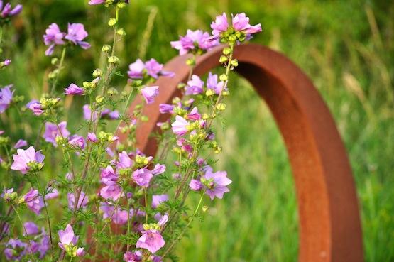 Gartenblog | Wild Gardening | Moschus-Malve| Garten Blog über einen Garten in der Heide