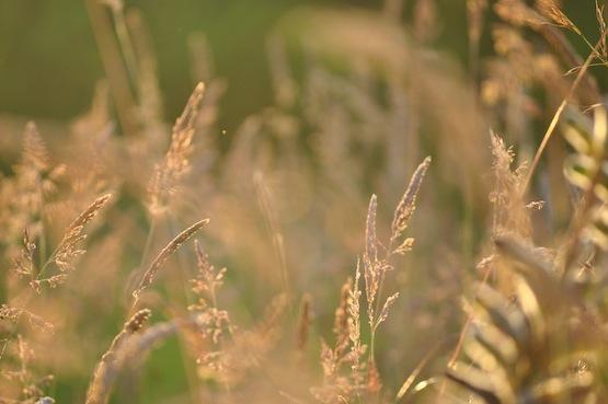 Gartenblog | Wild Gardening | Wiese| Garten Blog über einen Garten in der Heide