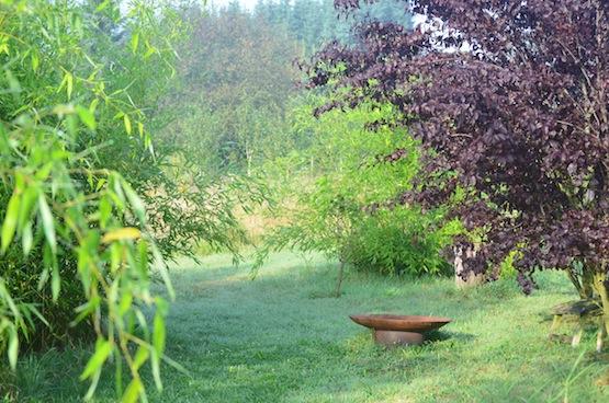 Gartenblog | Wild Gardening | Phyl. bissetii | Garten Blog über einen Garten in der Heide