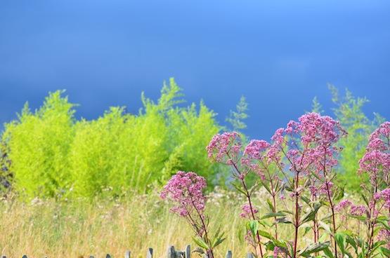Gartenblog | Wild Gardening | Gewitterstimmung| Garten Blog über einen Garten in der Heide