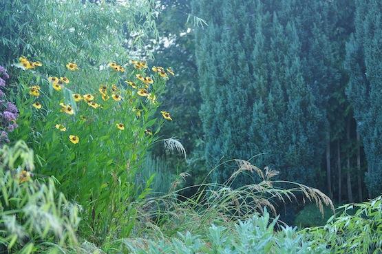 Gartenblog | Wild Gardening | Helenium| Garten Blog über einen Garten in der Heide