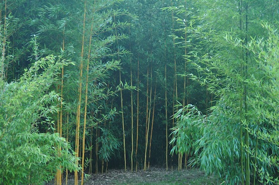 Gartenblog | Wild Gardening | Bambusweide| Garten Blog über einen Garten in der Heide