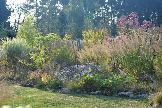 Gartenblog | Wild Gardening | Stuadenbeet| Garten Blog über einen Garten in der Heide