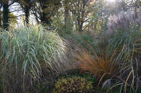 Gartenblog   Wild Gardening   Chinaschilf / Rohr-Pfeifengras  Garten Blog über einen Garten in der Heide