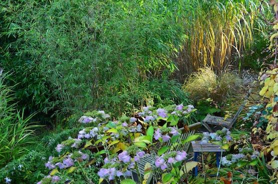 Gartenblog   Wild Gardening  Schattenplatz  Garten Blog über einen Garten in der Heide