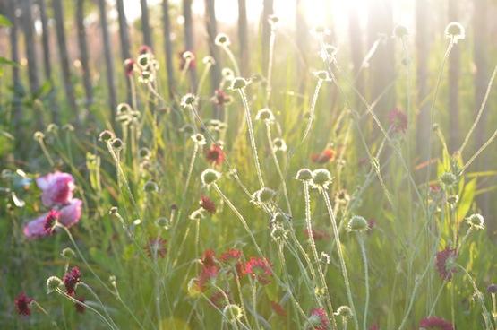 Gartenblog | Wild Gardening | Juli 2014 | Garten Blog über einen Garten in der Heide