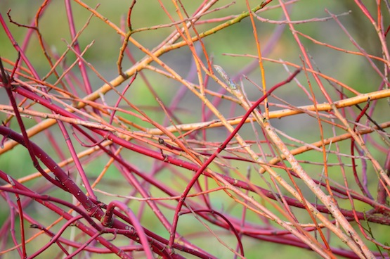 Gartenblog | Wild Gardening | Februar 2014 | Garten Blog über einen Garten in der Heide