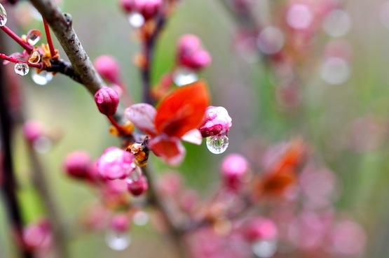 Gartenblog | Wild Gardening | März 2014 | Garten Blog über einen Garten in der Heide