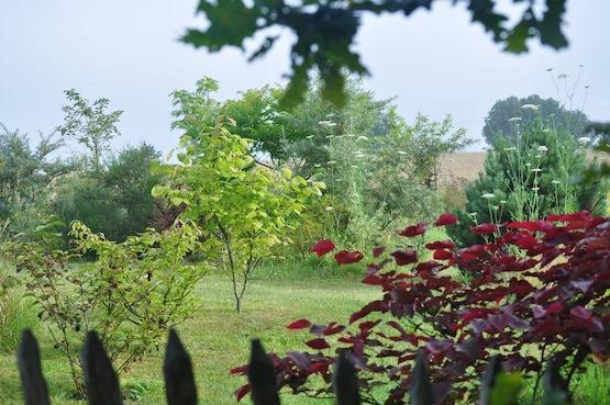 Gartenblog | Wild Gardening | August  2014 | Garten Blog über einen Garten in der Heide
