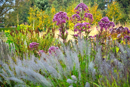 Gartenblog | Wild Gardening | September 2014 | Garten Blog über einen Garten in der Heide