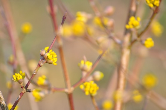 Garten Blog | Wild Gardening | Ein Garten in der Heide