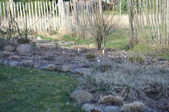 Gartenblog | Wild Gardening | Ein Garten in der Heide | Staudenbeet