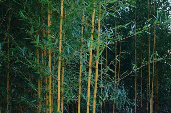 Wildgardening | Gartenblog | Ein Garten in der Heide | Bambus