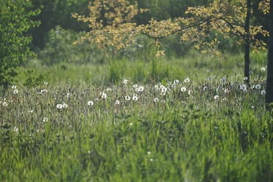 Wild Gardening | Gartenblog | Ein Garten in der Heide | Wiese