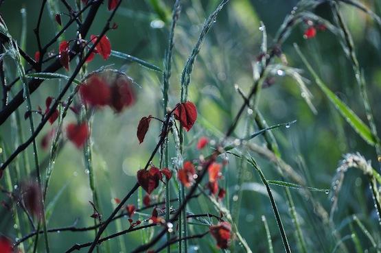 Wild Gardening | Gartenblog | Ein Garten in der Heide | Juni 2015