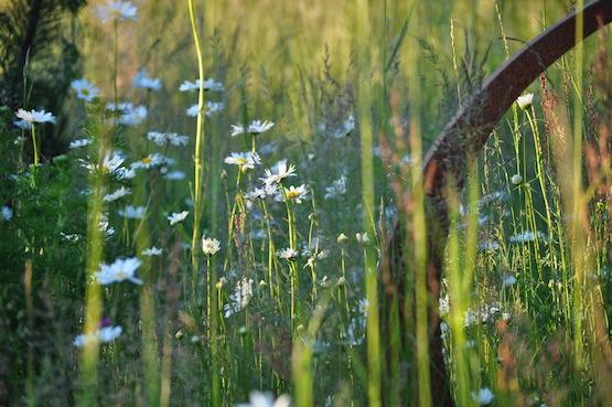 Wild Gardening | Garten Blog | Wilde Wiese