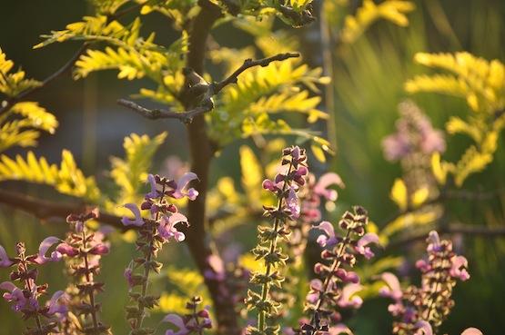 Wild Gardening | Gartenblog | Tolle Kombination