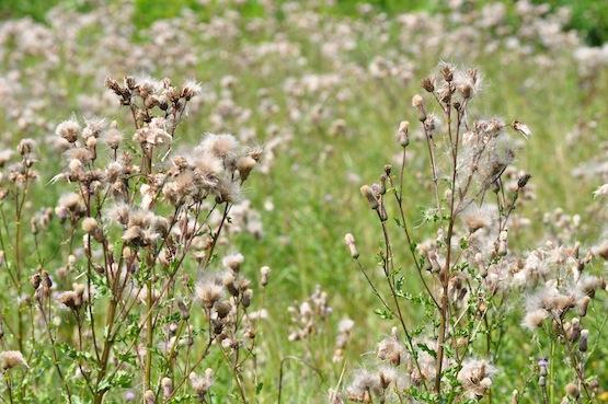 Wild Gardening | Gartenblog | Schön
