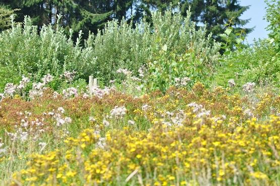 Wild Gardening | Garten Blog | Wilde Wiesen