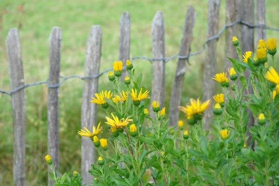Wild Gardening | Ein Garten in der Heide | Gartenblog | Zaun