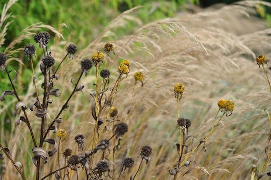 Wild Gardening | Gartenblog | Ein Garten in der Heide | Staudenbeet Oktober