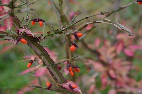 Wild Gardening | Ein Garten in der Heide | Gattenblog | Pfaffenhütchen