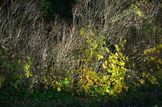 Wild Gardening | Gartenblog | Ein Garten in der Heide | Lichtspiel