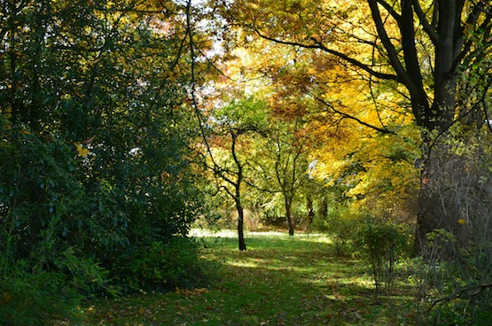 Wild Gardening | Ein Garten in der Heide | Gartenblog | Blick in den Obsthof