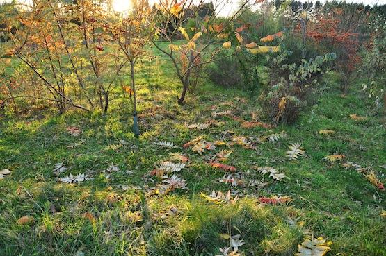 Wild Gardening | Gartenblog | Halbmondborder