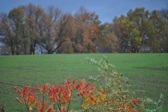 Wild Gardening | Gartenblog | Sturm