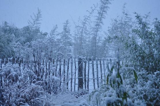 Wild Gardening | Gartenblog | Erster Schnee