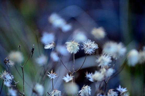 Wild Gardening | Gartenblog |