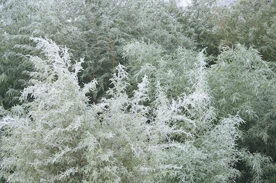 Wild Gardening | Gartenblog | Bambushain