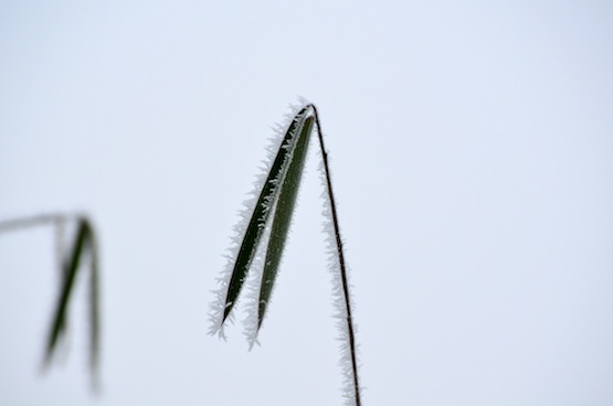 Wild Gardening | Gartenblog | Fargesia spez. Jiuzhaigou 'Wagner'