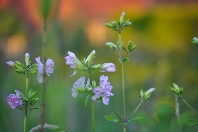 Wild Gardening | Gartenblog | Bildergalerie