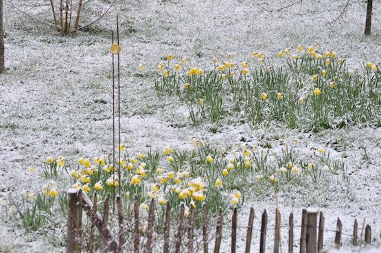 Wild Gardening | Gartenblog | Sometimes it snows in April