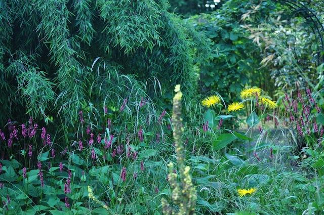Wild Gardening | Gartenblog | Nov 17 | Priona Farbenspiel