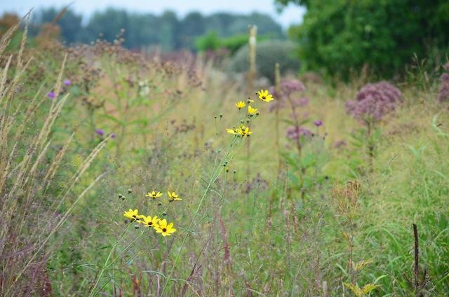 Wild Gardening | Gartenblog | Nov 17 | Hummelo Bürogarten