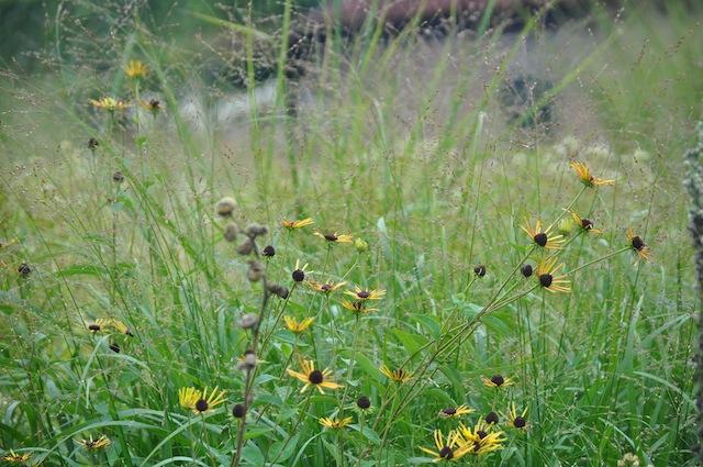 Wild Gardening | Gartenblog | Nov 17 | Hummelo Wiesen + Stauden