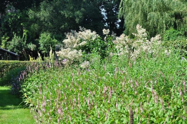 Wild Gardening | Gartenblog | nov 17 | Priona Border