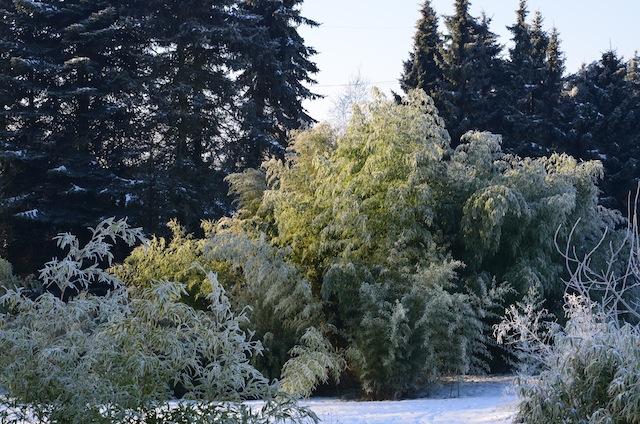 Wild Gardening | Gartenblog | Review Januar 2017