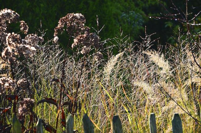 Wild Gardening | Gartenblog | Review Oktober 2017