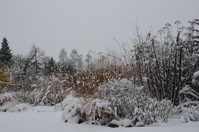 Wild Gardening | Gartenblog | Review Dezember 2017